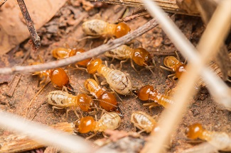 expert termite protection Lake Nona